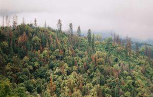 environmental nonprofit 19