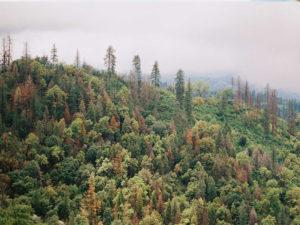 environmental nonprofit 31